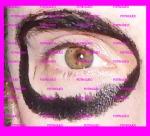 delimitar ojo pintura negra