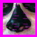 pintar nariz negra