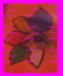 maquillaje flor